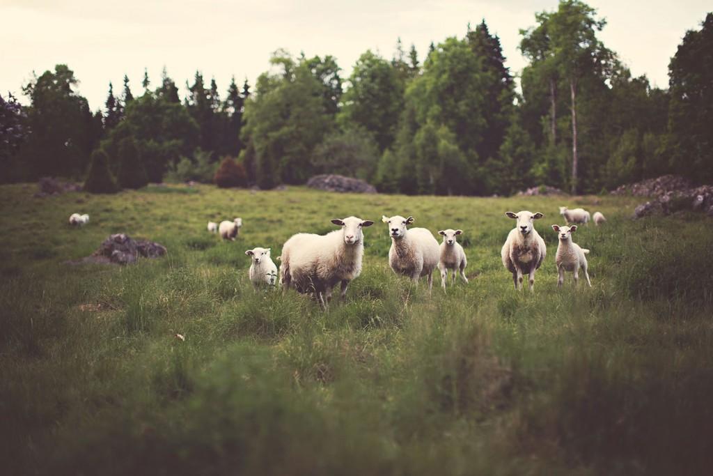 eat seasonal lamb